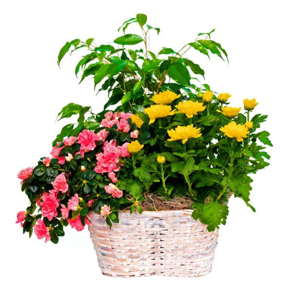 Composizione in cesto con piante verdi e fiorite