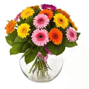 Vivacissimo bouquet di gerbere colorate